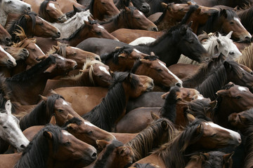 "Hundreds of wild horses are gathered during the ""Rapa Das Bestas"" event in Sabucedo"