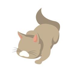 cat animal pet adorable domestic vector illustration