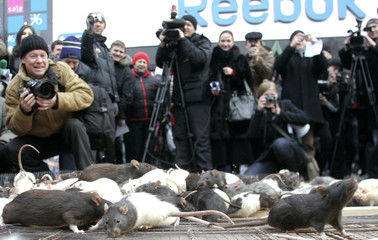 Journalists take pictures of rats during opposition street performance in Kiev