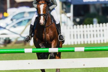 Show Jumping Horse Closeup Head On