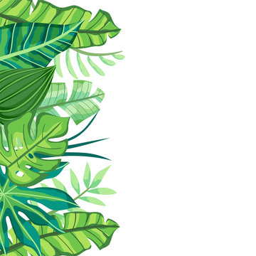 Isolated Tropical Background with leaves in the left side. Vector illustration.