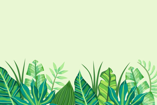 Green Tropical Background with leaves in the bottom side. Vector illustration.