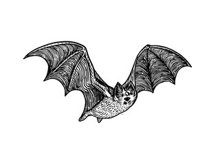Bat engraving style vector illustration