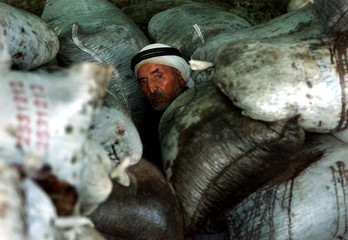 PALESTINIAN FARMER SITS BETWEEN BAGS OF OLIVES FROM FARM IN RAFAH.