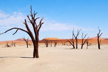 Wonderful Dead Vlei in Namibia