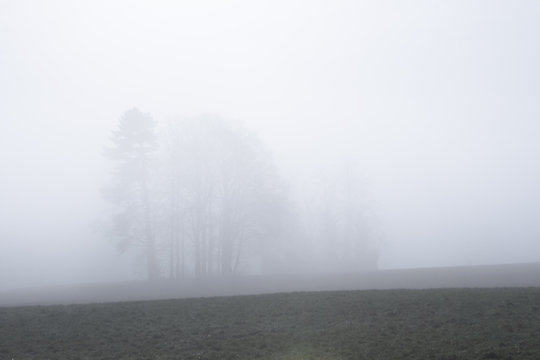 Trees in thick fog.