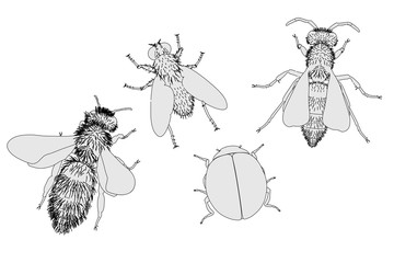 2d cartoon illustration of insect
