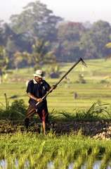 Early morning light shines on a farmer working in the rice paddies outside the town of Ubud, August ..