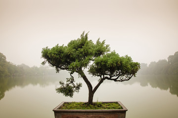 Foto op Plexiglas Bonsai Japanese bonsai tree in pot at zen garden. Bonsai is a Japanese art form using trees grown in containers, elegant design with copy space for placement your text, mock up