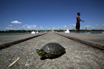 A turtle is seen on the jetty in Cocibolca lake at the colonial city of Granada