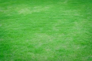 Lawns, freshly mown grass lawn