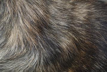 Photo sur Toile Les Textures Dog fur texture