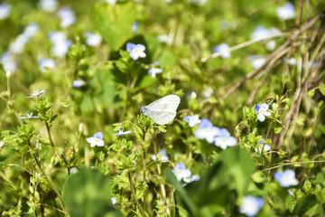 Wildflowers field butterfly