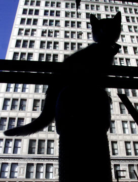A young kitten is silhouetted against a nearby office building as it sits atop a pole in the window ..