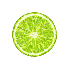 Vector lime slice. Illustration of citrus