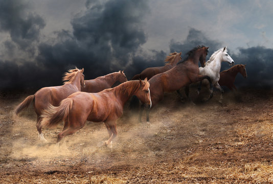 Rapid running of the herd of horses across the steppe from a thunderstorm