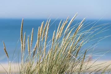 Long grass near a sandy beach and blue sea.