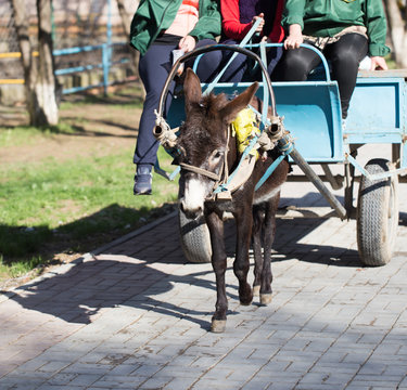 The donkey carries people in a cart