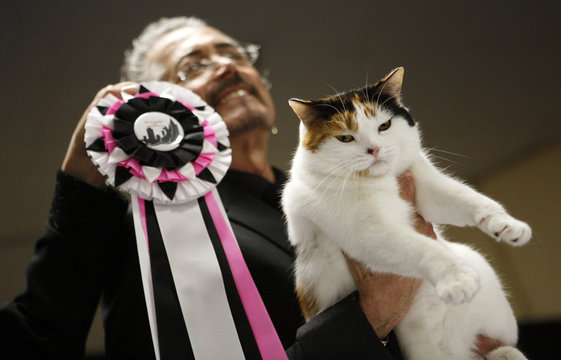 Judge holds cat after it was crowned Best in Show at the 2006 CFA-Iams Cat Championships in New York