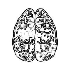 human brain icon over white background. vector illustration