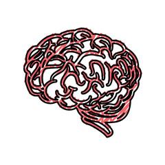human brain icon over white background. colorful design. vector illustration
