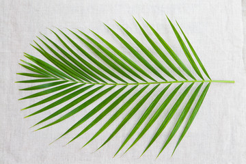 Palm leaf. Textile background. Top view Copy space