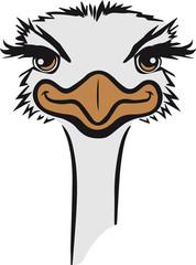 strauss emu hübsch süss