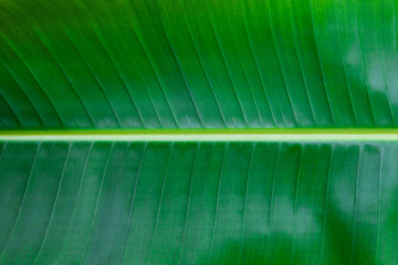 Palm leaf close up. Copy space. Green background