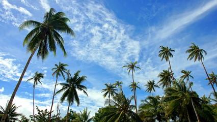 weiter Blick vom Palmenwald zum blauen Himmel