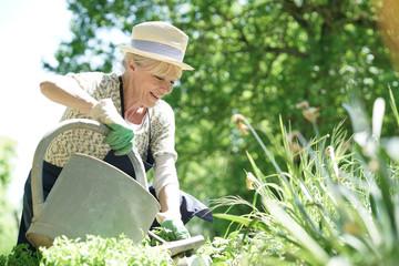 Senior woman gardening on beautiful spring day Wall mural