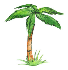 Single green cartoon palm tree on a patch of tall grass painted in watercolor on clean white background