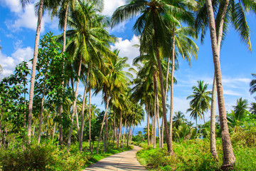 Tropical landscape with palm tree road. Palm road in tropical island.