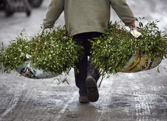 A buyer leaves the mistletoe and holly auction in Tenbury Wells