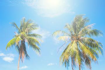 Tropical island palm tree scene. Bright blue sky background.