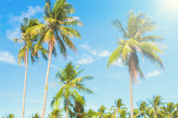 Palm tree in hot air of tropical island. Bright blue sky background.