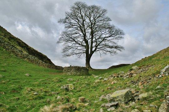 Sycamore Gap - Hadrians Wall