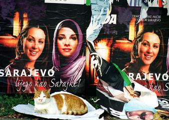 """A cat sits in front of a billboard reading """"Sarajevo, as beautiful as Sarajevo women"""" in Sarajevo, O.."""