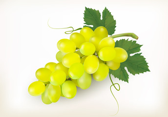 Green grapes fruit isolated on white background. Vector