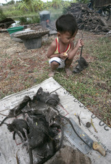A child holds a dead rat by its tail in Suphan Buri province