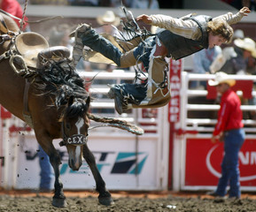Novice cowboy Hewlitt of Australia goes over the top of horse War Drum during Novice Saddle Bronco event at Calgary Stampede Rodeo