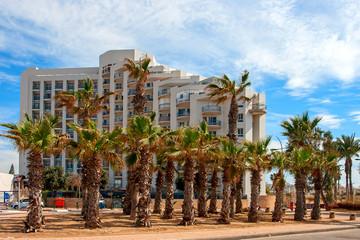 Ashkelon summery coastline with palm trees