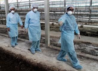 VIETNAMESE AUTHORITIES INSPECT DESTROYED CHICKEN FARM IN BAC LIEU PROVINCE.
