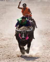 Jockeys compete during Chonburi's annual buffalo races festival