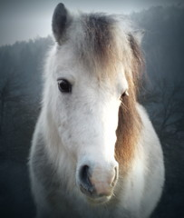 Cute white pony