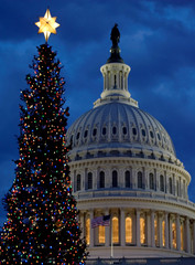 The U.S. Capitol Christmas Tree stands lit with the U.S. Capitol in the background in Washington