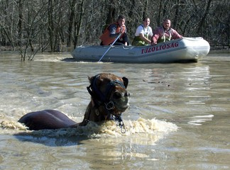 FIREFIGHTERS ATTEMPT TO RESCUE A HORSE FROM FLOOD WATER.