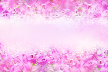 pink and purple spring flower Bougainvillea frame with copy space for text that can be used as wallpaper, wedding and event background