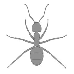 2d cartoon illustration of ant