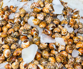 Small sea snails at market still alive