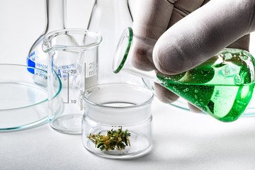 Pouring Liquid into Small Glass Container Containing Marijuana Bud